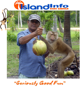 Island Info, Monkey Business, Koh Samui, Thailand.23.jpg