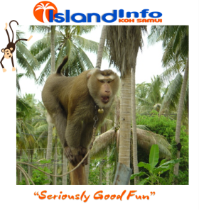Island Info, Monkey Business, Koh Samui, Thailand.24.jpg