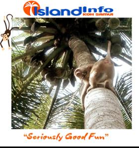 Island Info, Monkey Business, Koh Samui, Thailand.25.jpg
