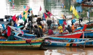 Island Info, fresh seafood, fishermen,  Koh Samui.7