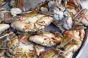 Island Info, fresh seafood, Koh Samui.11