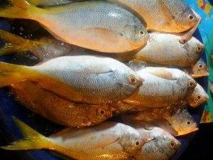 Island Info, fresh seafood, Koh Samui.18