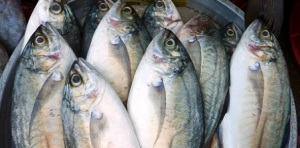 Island Info, fresh seafood, Koh Samui.6