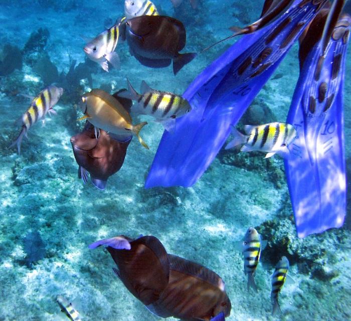 Island-Info-Snorkeling-Koh-Samui.11