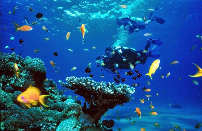 Island-Info-Snorkeling-Koh-Samui.121