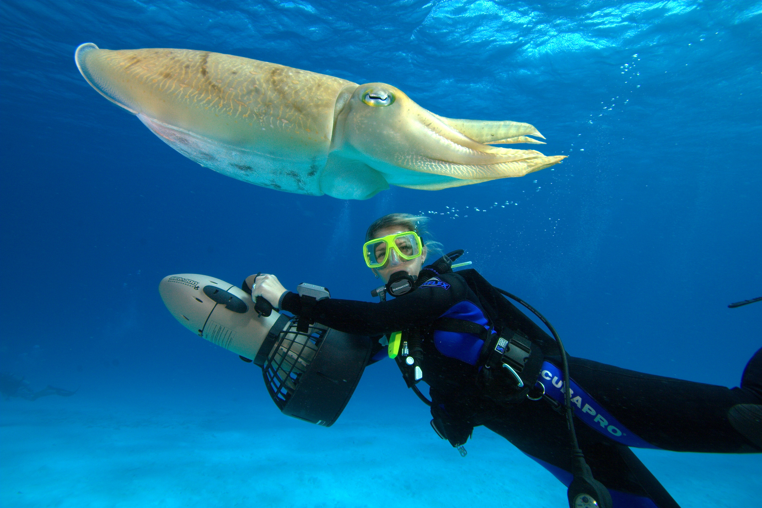Snorkeling and Diving in Koh Samui, Koh Tao and Koh ...