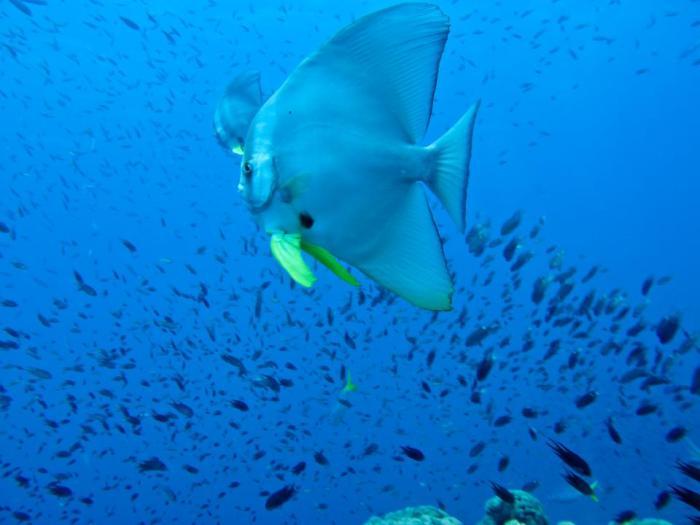 Island-Info-Snorkeling-Koh-Samui.22