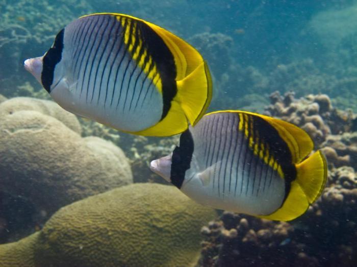 Island-Info-Snorkeling-Koh-Samui.24