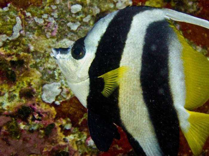 Island-Info-Snorkeling-Koh-Samui.25