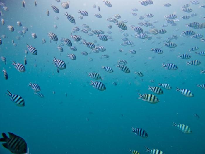 Island-Info-Snorkeling-Koh-Samui.27