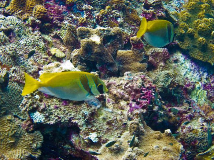 Island-Info-Snorkeling-Koh-Samui.32
