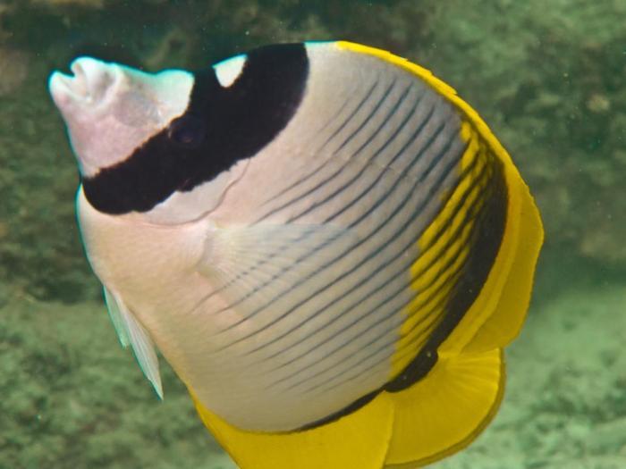 Island-Info-Snorkeling-Koh-Samui.42