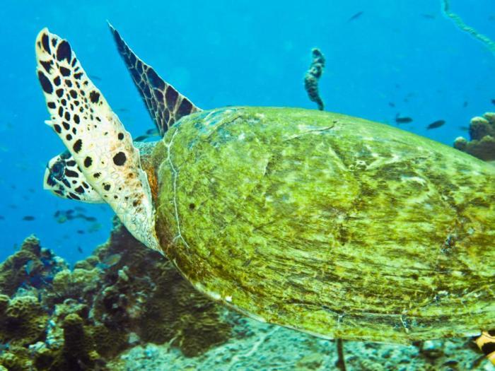 Island-Info-Snorkeling-Koh-Samui.43