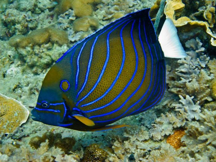Island-Info-Snorkeling-Koh-Samui.44