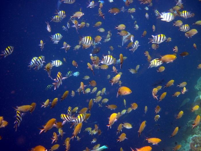 Island-Info-Snorkeling-Koh-Samui.57