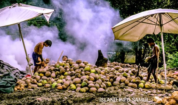 COCONUTS_MONKEYS_TOURS_COCONUTS_MONKEYS_TOURS-ISLAND_INFO_SAMUI_THAILAND