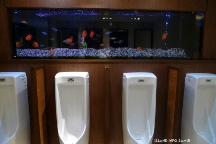 Fish Tank above urinals